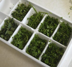What do I do with my herbs? Freezing from My Kitchen Wand