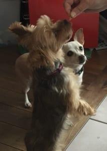 Doggy Treats form My Kitchen Wand