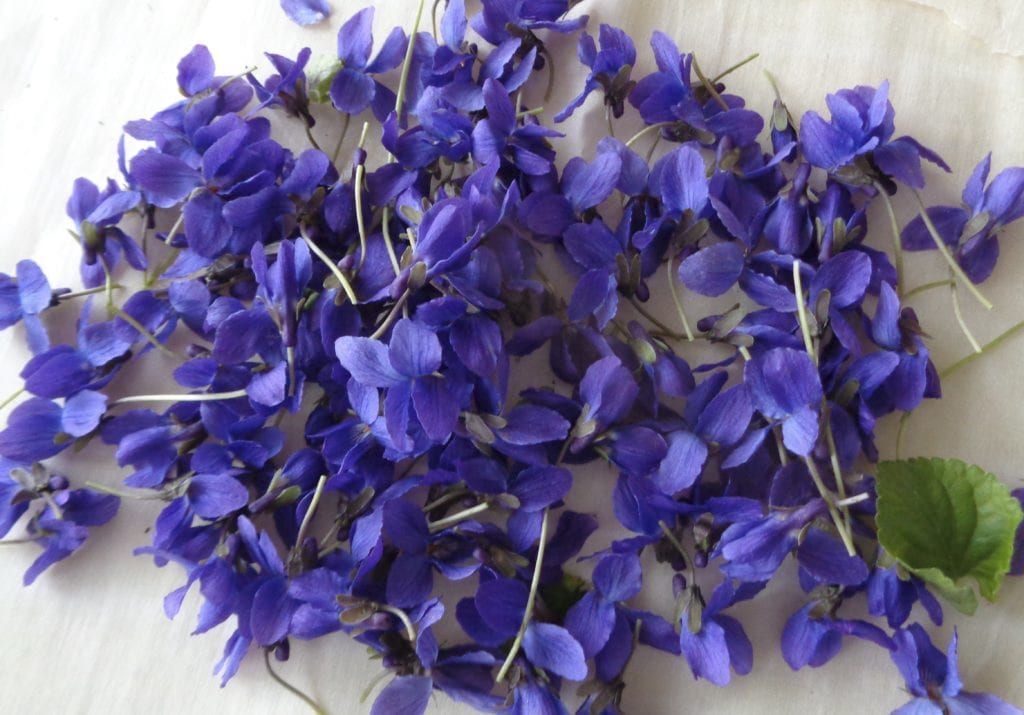 Wild Violet Sugar from My Kitchen Wand