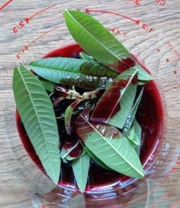 Lemon Verbena & Black Currant Tisane from My Kitchen Wand
